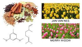 Тюльпан в парфюмерных ароматах